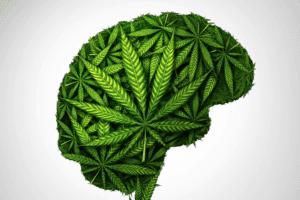 השפעת מריחואנה על המוח